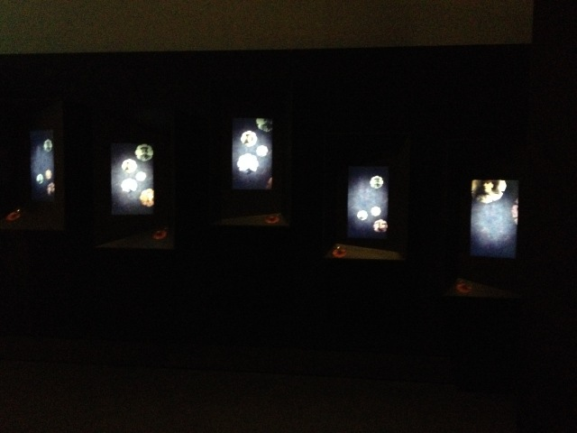 Love and Sorrow final digital screens, Melbourne Museum, 2015