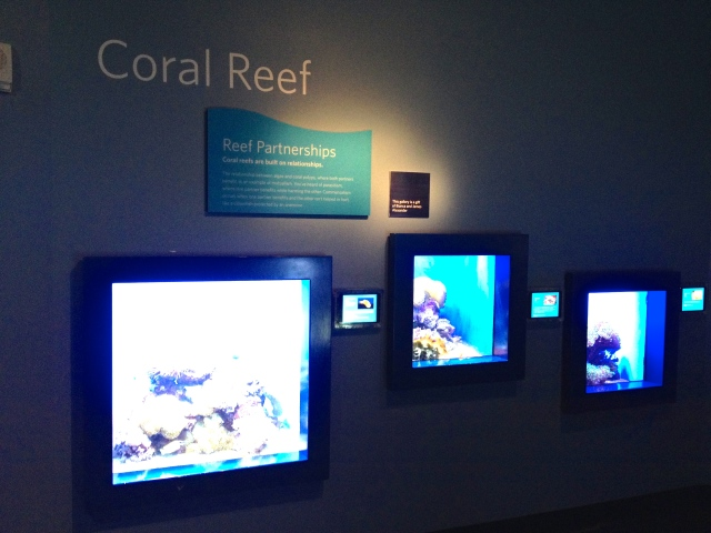 Physical and digital labels, California Academy of Arts and Sciences, 2015